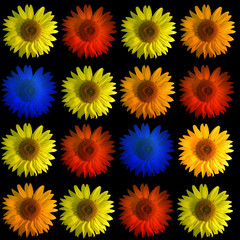 sonnenblume collage