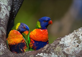 Colourful couple.