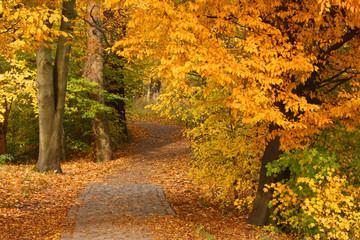 Weg durch Herbstwald im Jenischpark in Hamburg, Fall foliage