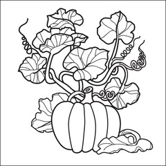 stylish black and white pumpkin