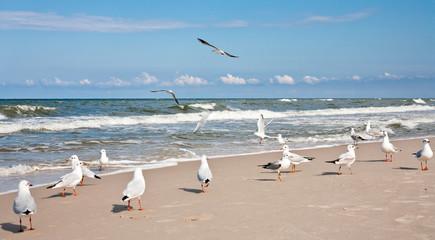Seagulls at the Baltic sea. Wall mural