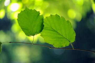 foglie 1108