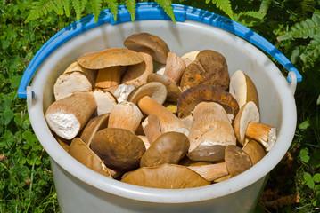 Bucket with mushrooms 13
