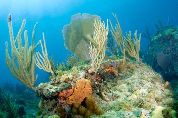 Sea Fan and Sea Rod