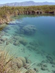 Freshwater Stromatolite Reef Cuatro Cienegas Coahuila Mexico
