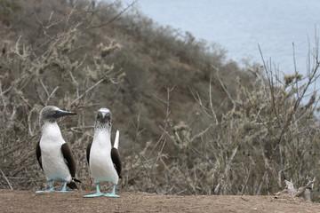 Couple de fou aux pieds bleus