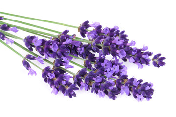 Wall Mural - Isolated lavender
