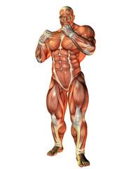 Wall Mural - Muskelstudie eines Boxers