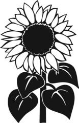 Sunflower Vinyl Ready Vector Illustration
