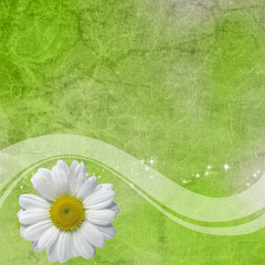 Green background with daisy