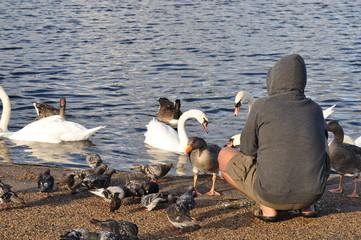Mann fütter Vögel