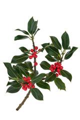 Holly Berry Leaf Sprig