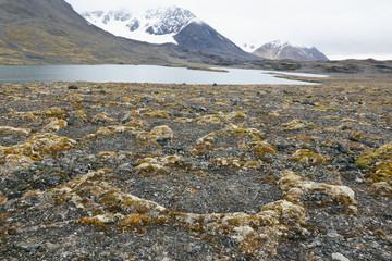 lilliehöökfjorden_tundra