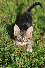 Cat playing on the grass