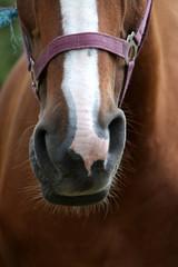 Pferdemaul