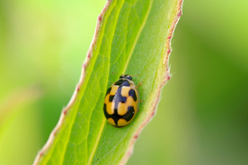a ladybug resting in the leaves