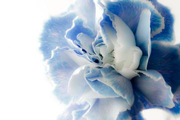 White Light blue Carnation Wall mural