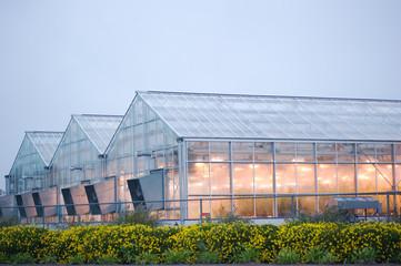Fototapeta industrial greenhouse in davis obraz