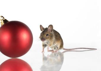 Maus mit Weihnachtskugel