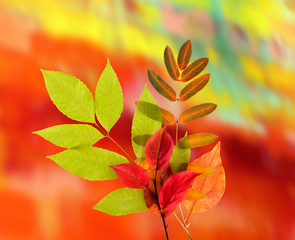 Autumn Leaves on a color background