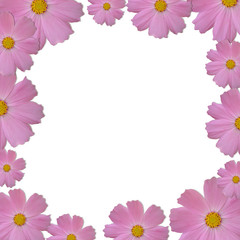 Pink daisy frame on white background