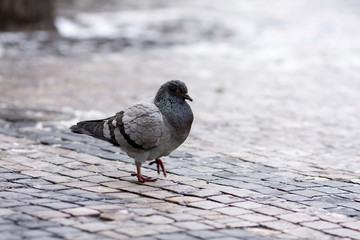 City street bird