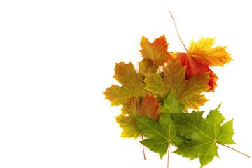 Blätter Laub Zauber Herbst