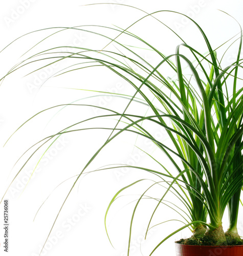 Plante verte photo libre de droits sur la banque d for Plantes vertes