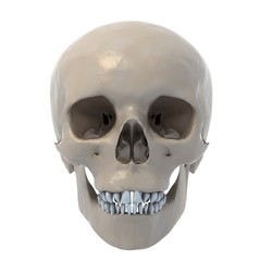 human skull 3d illustration
