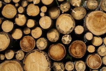 Obraz ścięte drzewa - fototapety do salonu