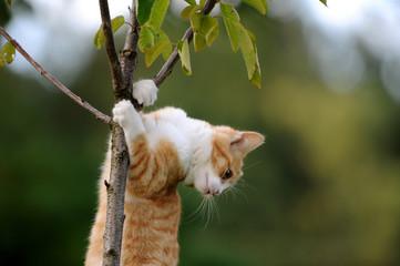 Kätzchen im Baum