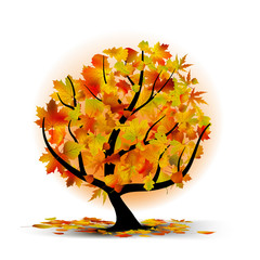 Autumn tree with colourful leafs