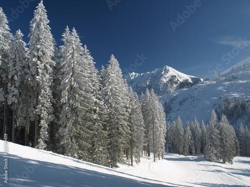 winter weihnacht schnee piste stockfotos und lizenzfreie. Black Bedroom Furniture Sets. Home Design Ideas