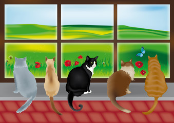 Printed kitchen splashbacks Cats gatti davanti a una vetrata