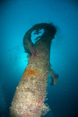 Marine life on the  Rosalie Moller, World war 2 shipwreck.