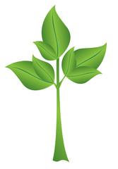 vector illustration - small green plant