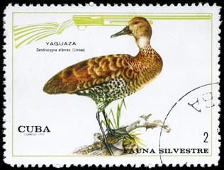 CUBA - CIRCA 1970 Duck