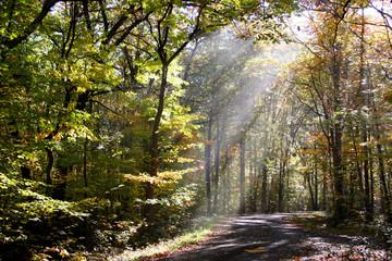 Morning sun rays falling through trees on ground