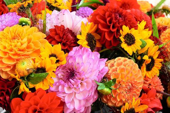 Dahlien, Herbstfarben, Schnittblumen