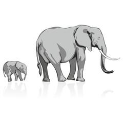 fully editable vector illustration of wild elephants