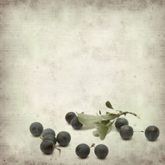 textured old paper background with sloe