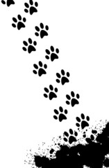 Black splash and paw prints background - vector