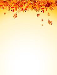 Autumn leaves background for your design