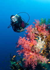 Feamle scuba diver and colourful coral reef