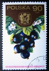 POLAND - CIRCA 1974: Shows blackberry.