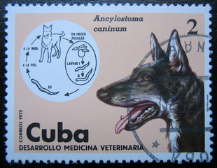 CUBA - CIRCA 1975: Shows dog Veterinary Medicine.