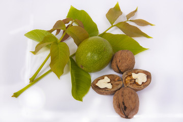 Fresh walnut and leaves isolated on a white background