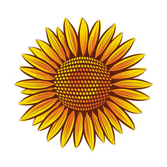 Vector sunflower head isolated on white background