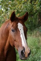 Pferde & Natur