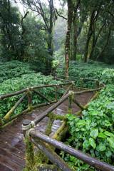 rain-forest trail